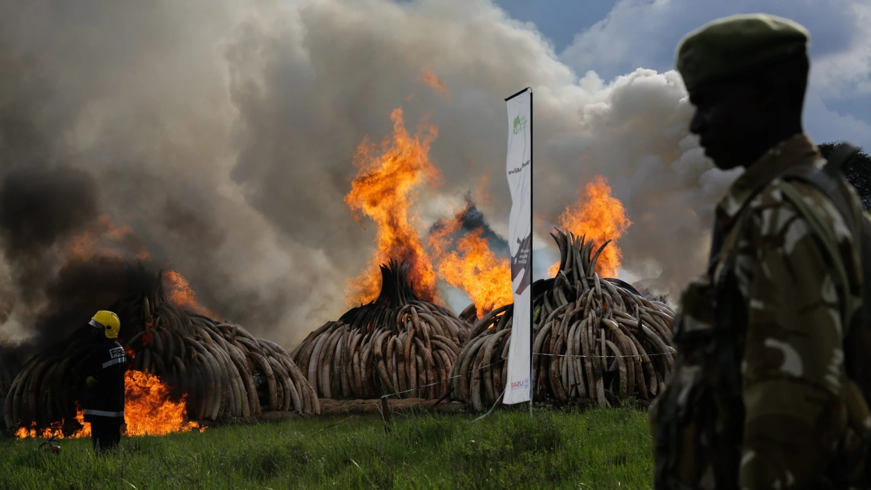 Kenya Torches 150M Worth Of Elephant Tusks In Historic