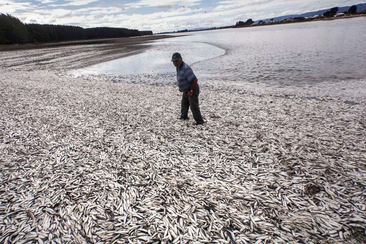 Chile S Worst Ever Toxic Red Tide Is Killing The Fishing