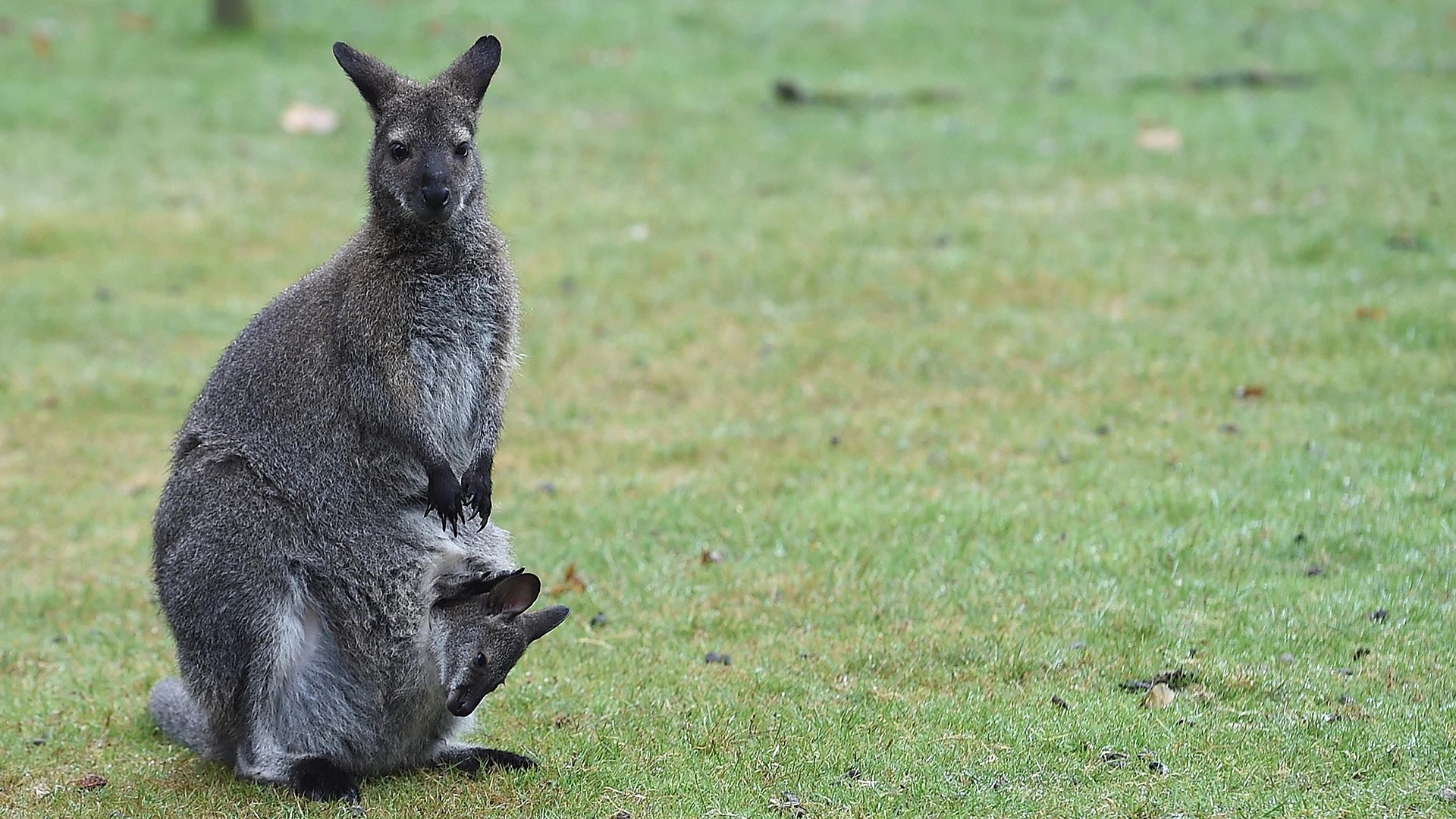 Snug Wallaby And More In This Week S Best Animal Pictures