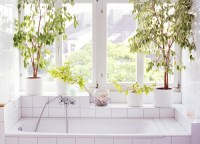 3 benefits of bathroom and shower plants - TODAY.com