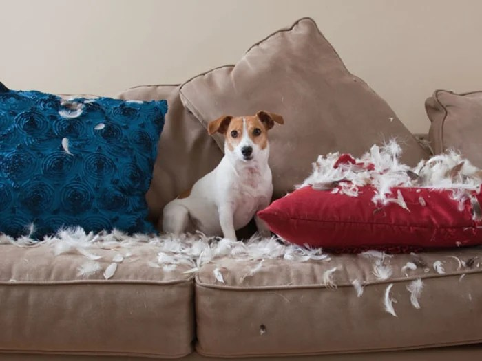Tips To Stop Pets From Destroying Your Nice Stuff TODAY Com