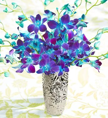 Ocean Breeze Orchids 10 20 Stems 10 Stems With Silver Embossed