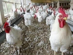 Grippe aviaire : la Mauritanie prend des mesures contre le Sénégal