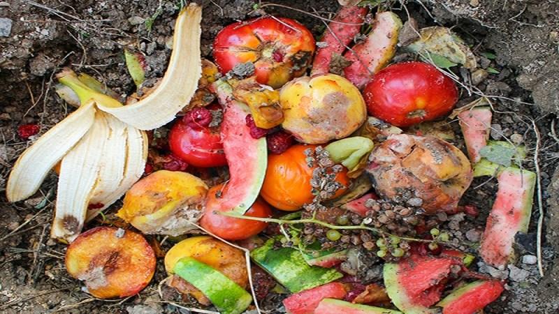 811 millions de personnes souffrent de la faim, le monde gaspille 17% de la nourriture qu'il produit selon le (FAO)