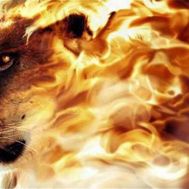 https://2.bp.blogspot.com/-l9EAR1jbzto/U10EvYqc7HI/AAAAAAAAK_Q/RK-8D3KggHU/s1600/lion.jpg