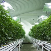 Is home delivery for medical marijuana coming to Kentucky?