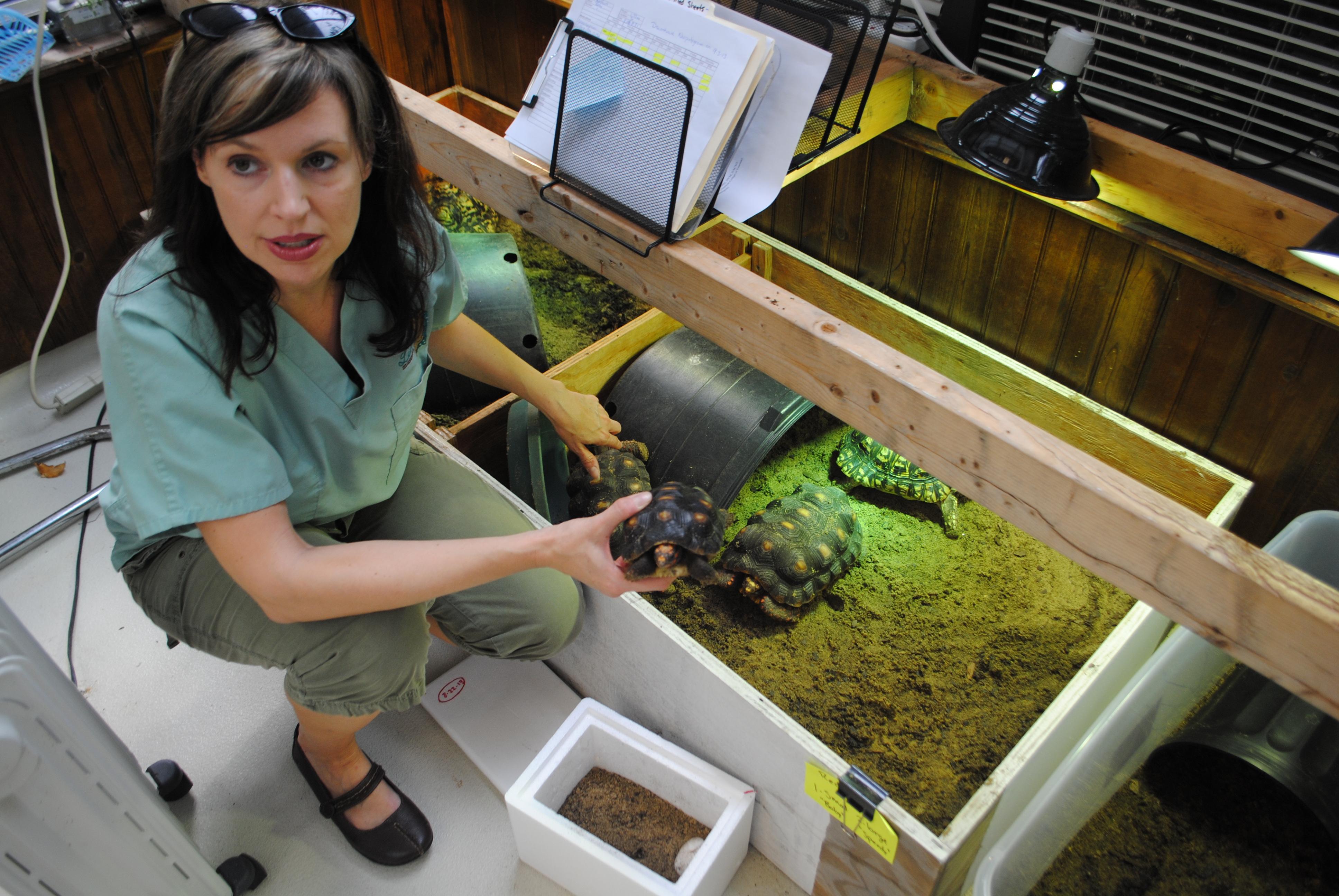Virginia Living Museum Rehabs Tortoises Rescued From Pet