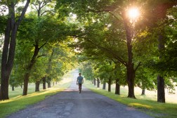 A man walking down a tree lined avenue in the countryside.