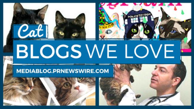 Cat bloggers