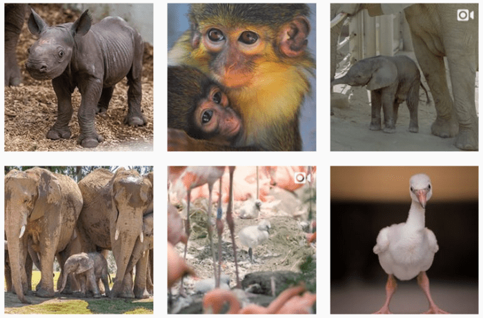Six recent posts from @zooborns on Instagram