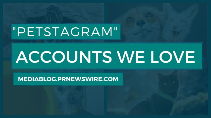 Petstagram Accounts We Love - mediablog.prnewswire.com