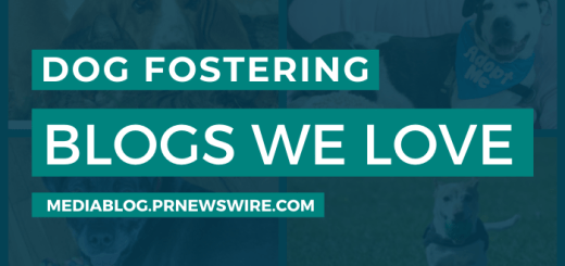 Dog Fostering Blogs We Love - mediablog.prnewswire.com