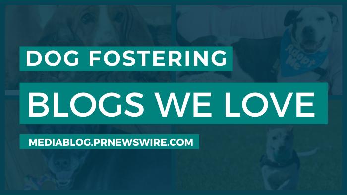 Dog Fostering Blogs We Love - mediablog.prnewswire.com