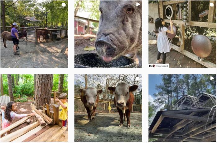 Museum Blogs We Love - screenshot of @museumoflifeandscience on Instagram