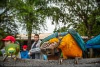 Passeio ao Pantanal - Arautos do Evangelho
