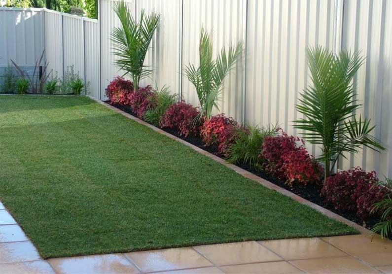 Yuccas & Cordylines Gardens Gallery Landscape Inspirations