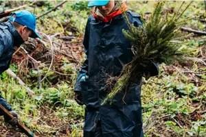 De ce au plantat cei de la brandul de apă plată Bucovina 3.000 de brăduți