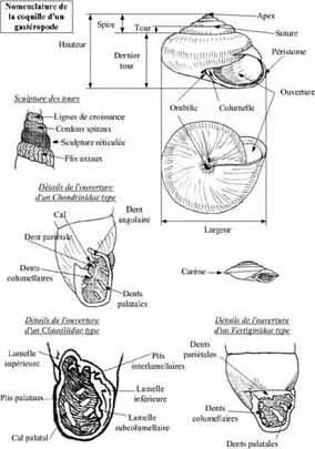 Mollusques Terrestres et Dulcicoles de Belgique, Tomes 1