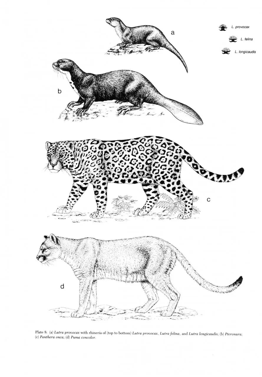 Mammals of the Neotropics: Volume 2: The Southern Cone