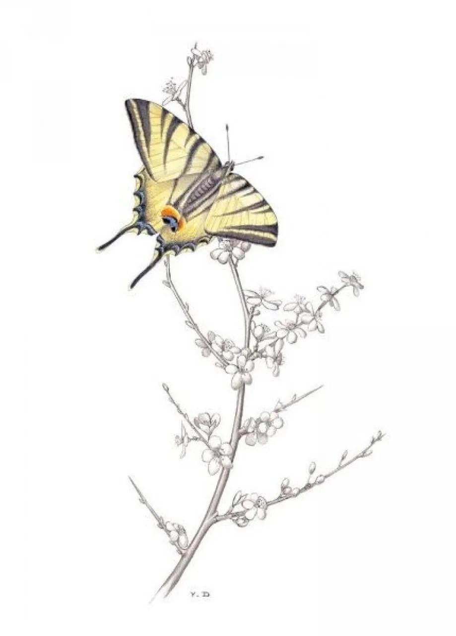 Les Papillons de Jour d'Île-de-France et de l'Oise [The