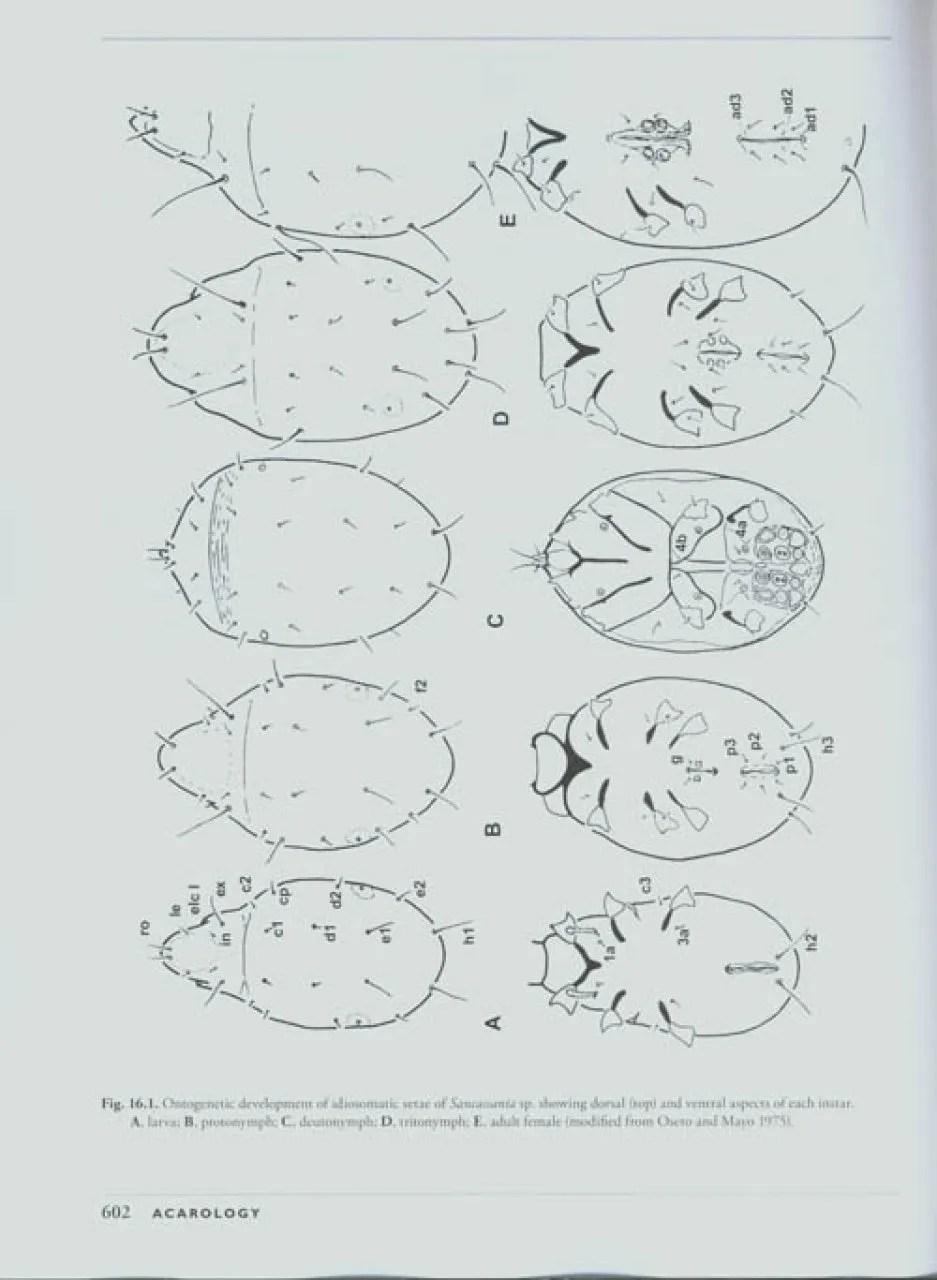 A MANUAL OF ACAROLOGY KRANTZ PDF