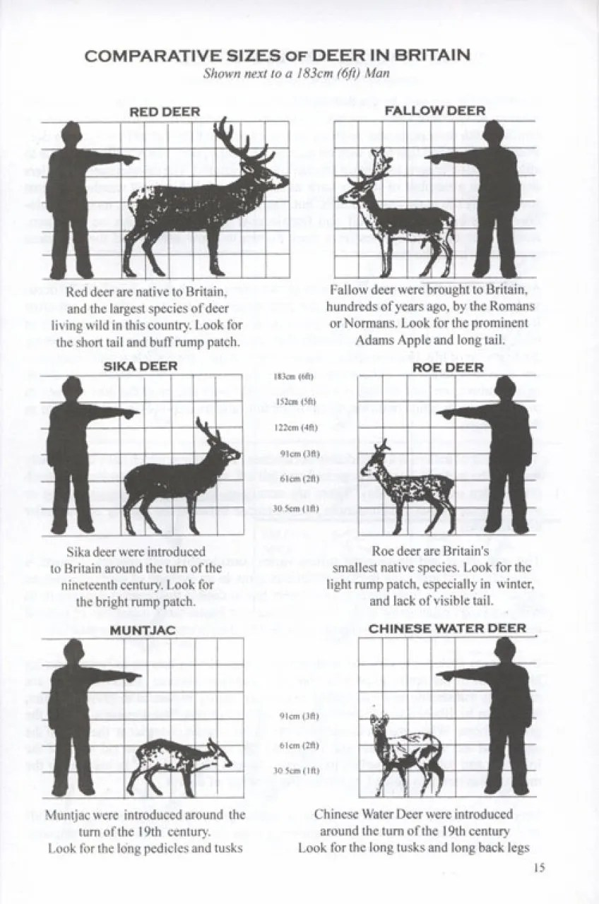 A Field Guide to Deer of Britain: Jeanette Lawton and