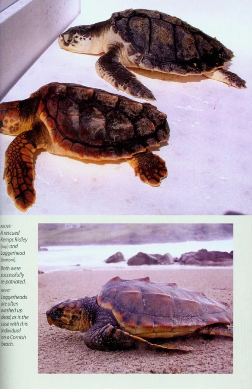 Britains Reptiles and Amphibians  NHBS Field Guides  Natural History