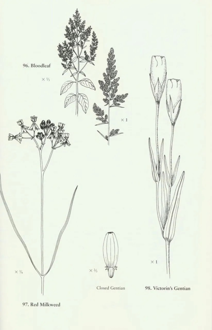Field Guide to Tidal Wetland Plants of the Northeastern