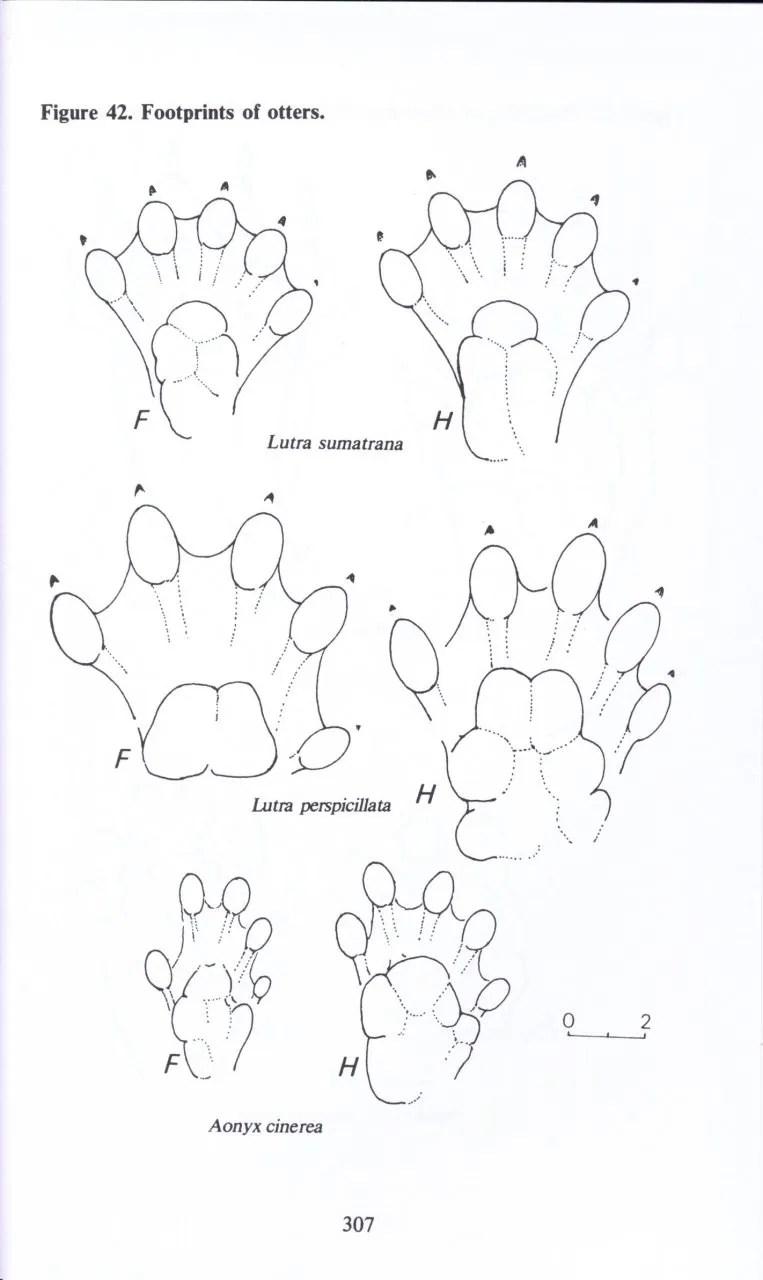 A Field Guide to the Mammals of Borneo: Junaidi Payne