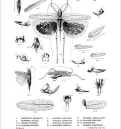 locusts crickets and katydids of mexico chapulines langostas  [ 901 x 1280 Pixel ]