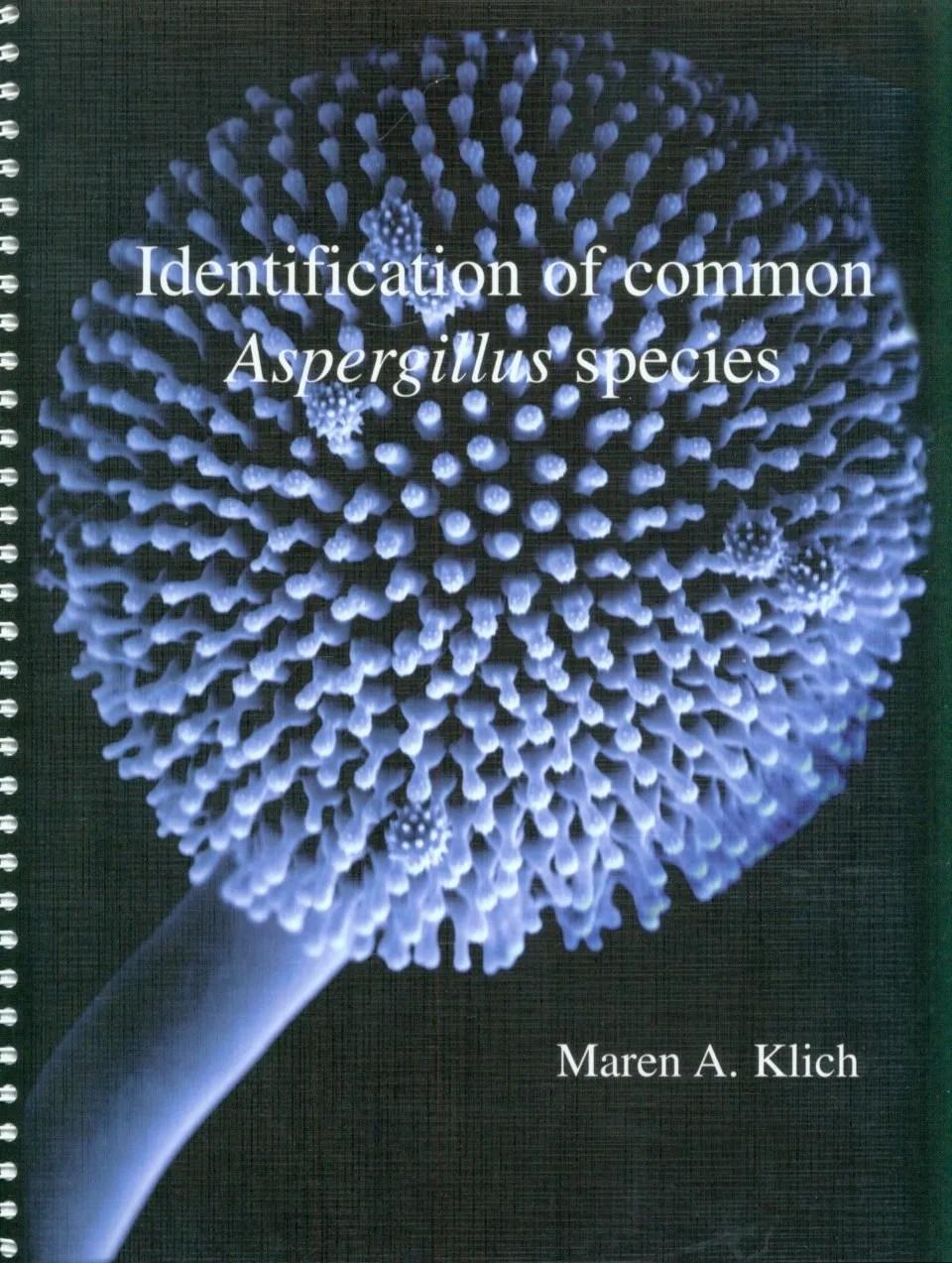 Aspergilus Wentii : aspergilus, wentii, Identification, Common, Aspergillus, Species, Field, Guides, Natural, History
