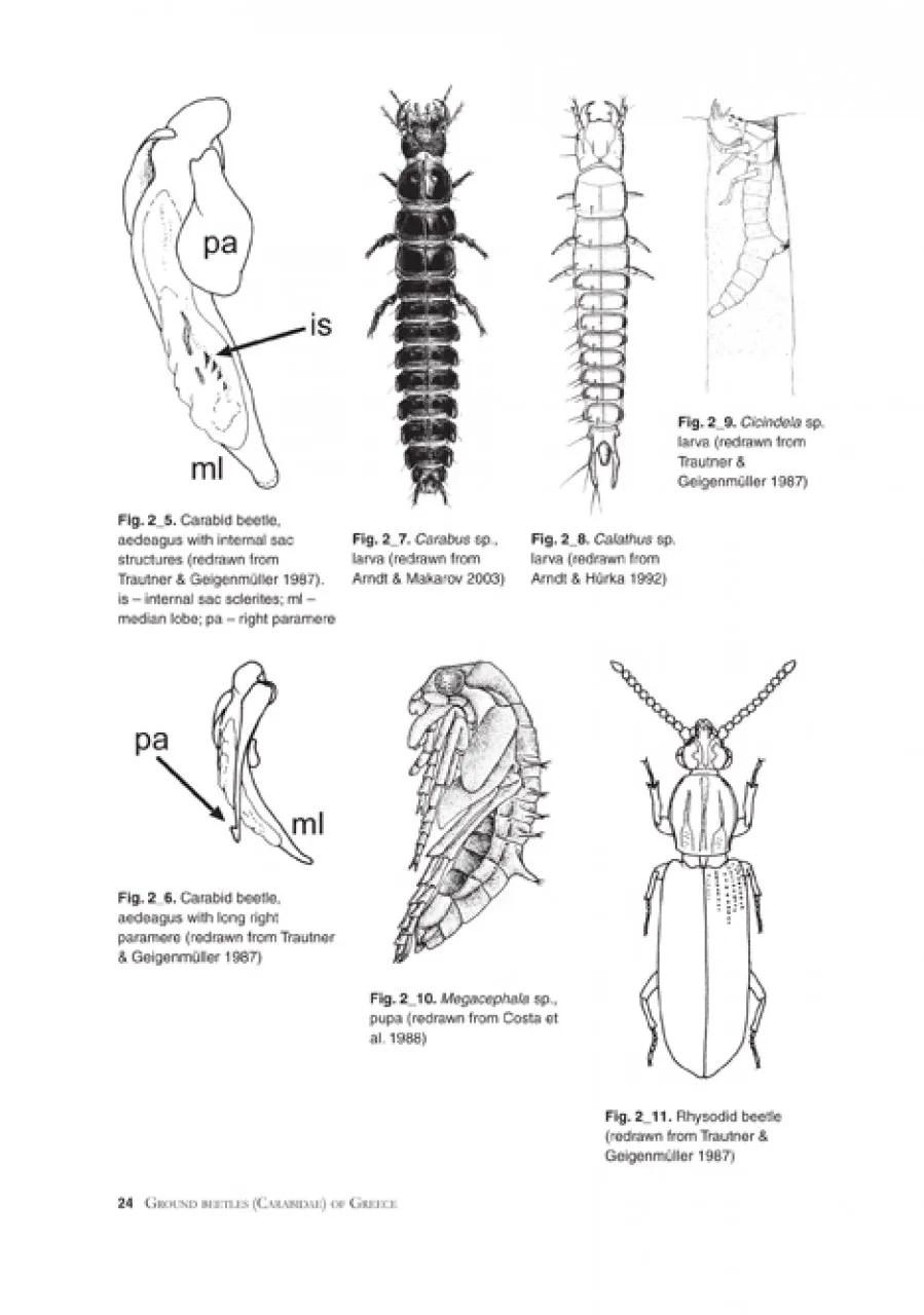 Ground Beetles (Carabidae) of Greece: Erik Arndt, Peer