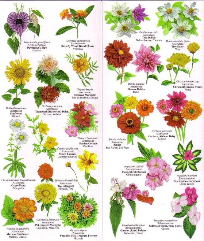 list of flowers by common name  flower, Beautiful flower
