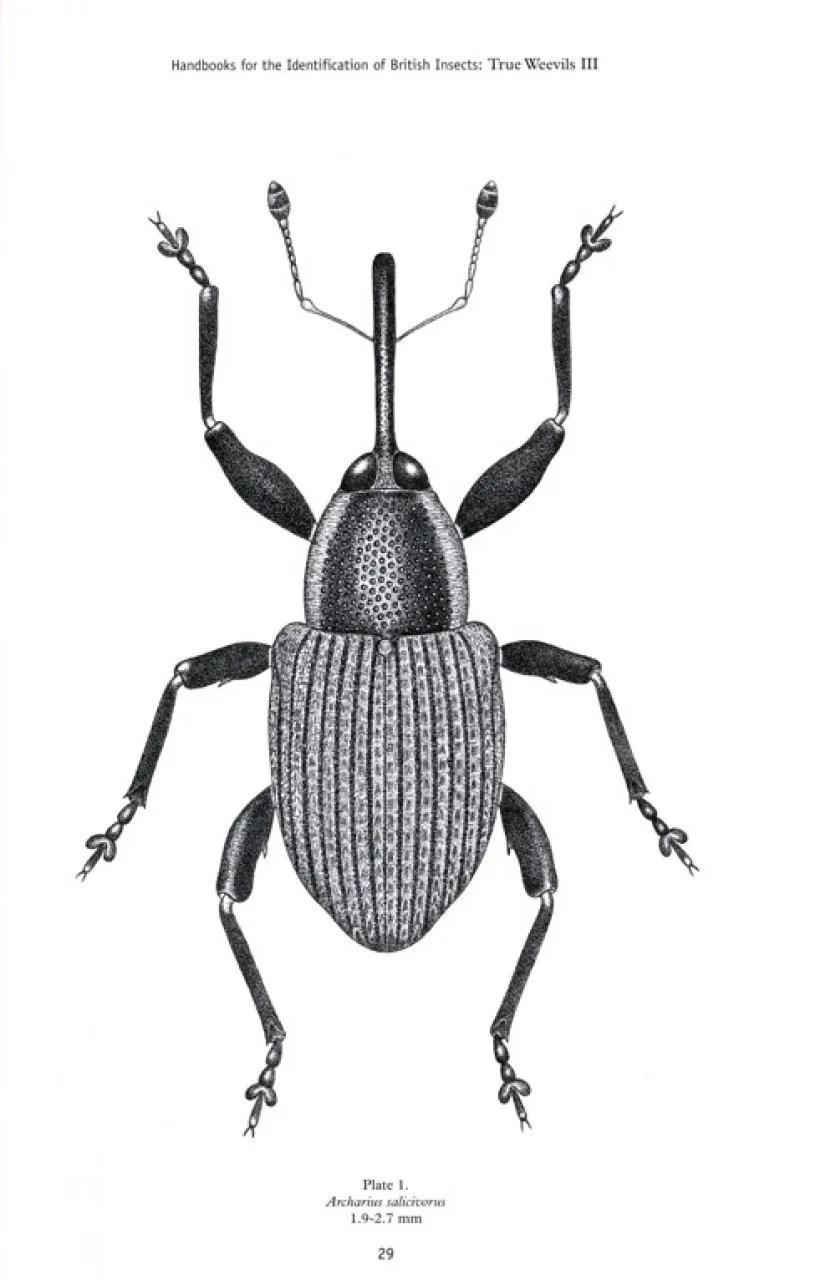 RES Handbook, Volume 5, Part 17d: True Weevils (Part III