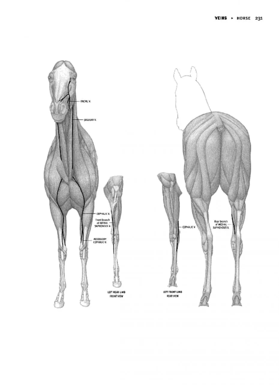 Animal Anatomy for Artists: The Elements of Form: Eliot