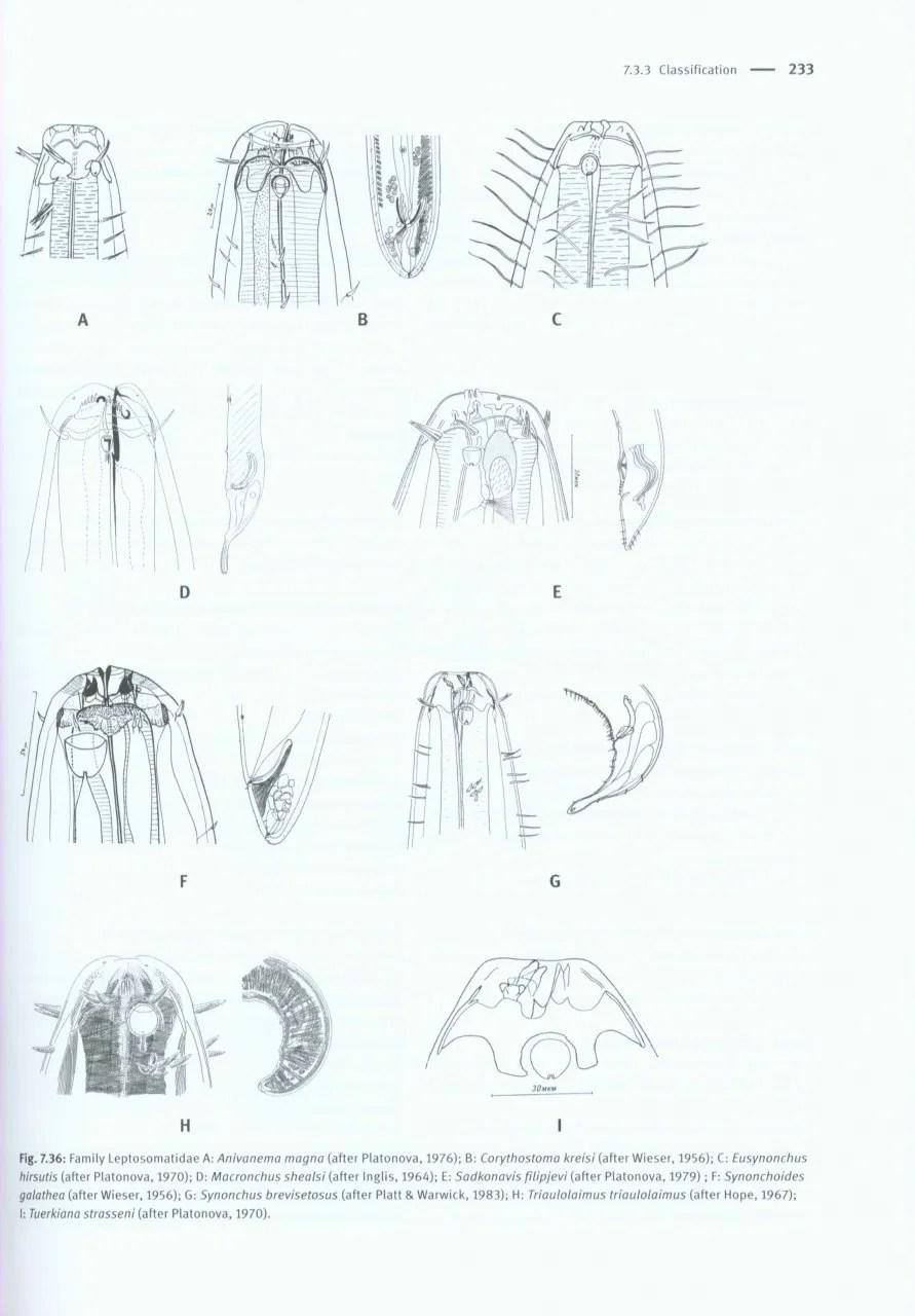 Handbook of Zoology: Gastrotricha, Cycloneuralia and