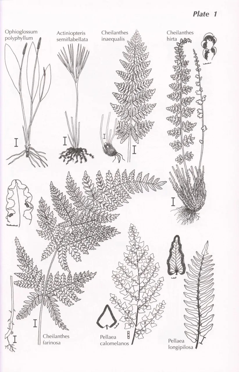 Upland Kenya Wild Flowers and Ferns: Andrew DQ Agnew
