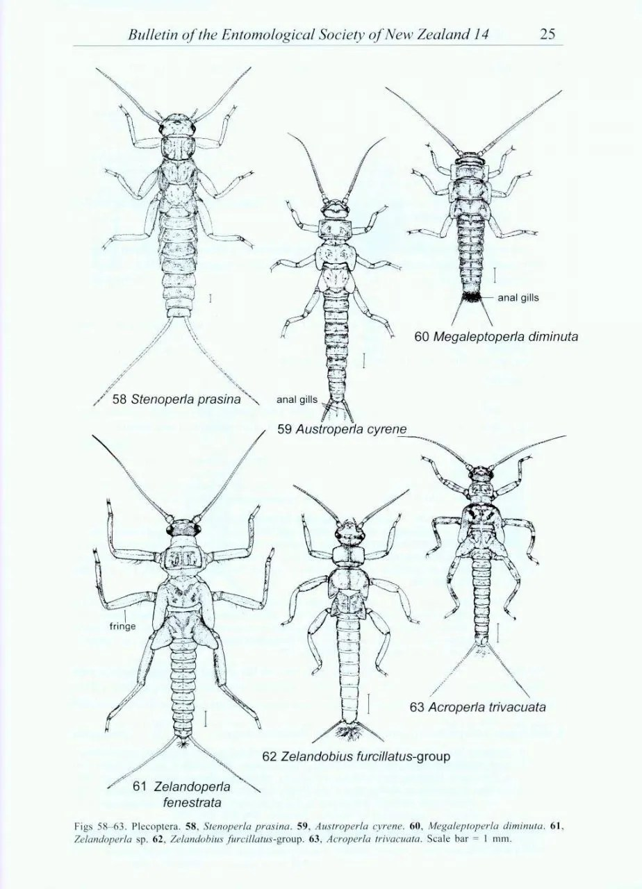 Guide to the Aquatic Insects of New Zealand: Michael J