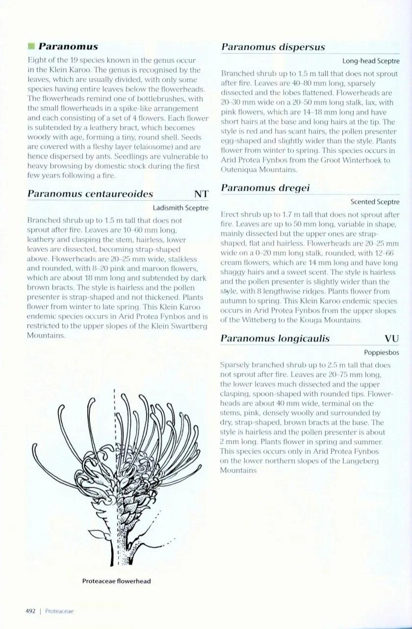 Plants of the Klein Karoo: Jan Vlok, Anne Lise Schutte