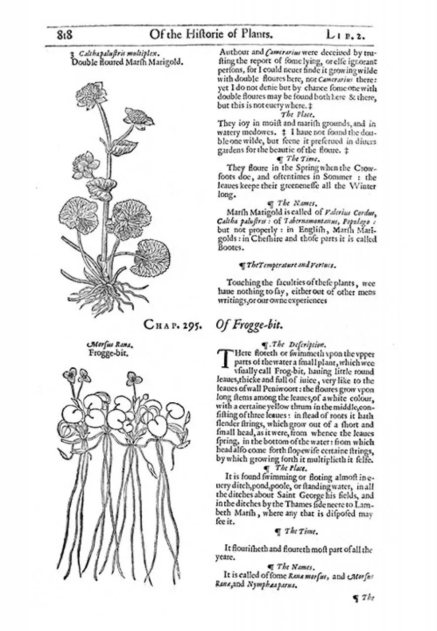The Herbal or General History of Plants: John Gerard
