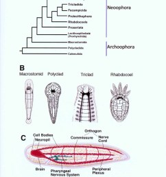 structure and evolution of invertebrate nervous systems structure and evolution of invertebrate nervous systems  [ 944 x 1280 Pixel ]