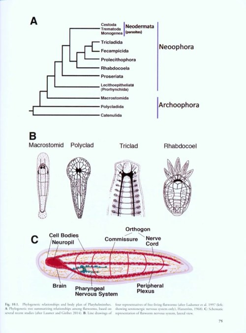 small resolution of structure and evolution of invertebrate nervous systems structure and evolution of invertebrate nervous systems