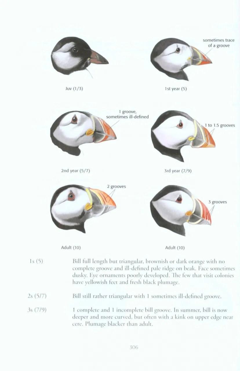 Identification of European Non-Passerines: A BTO Guide
