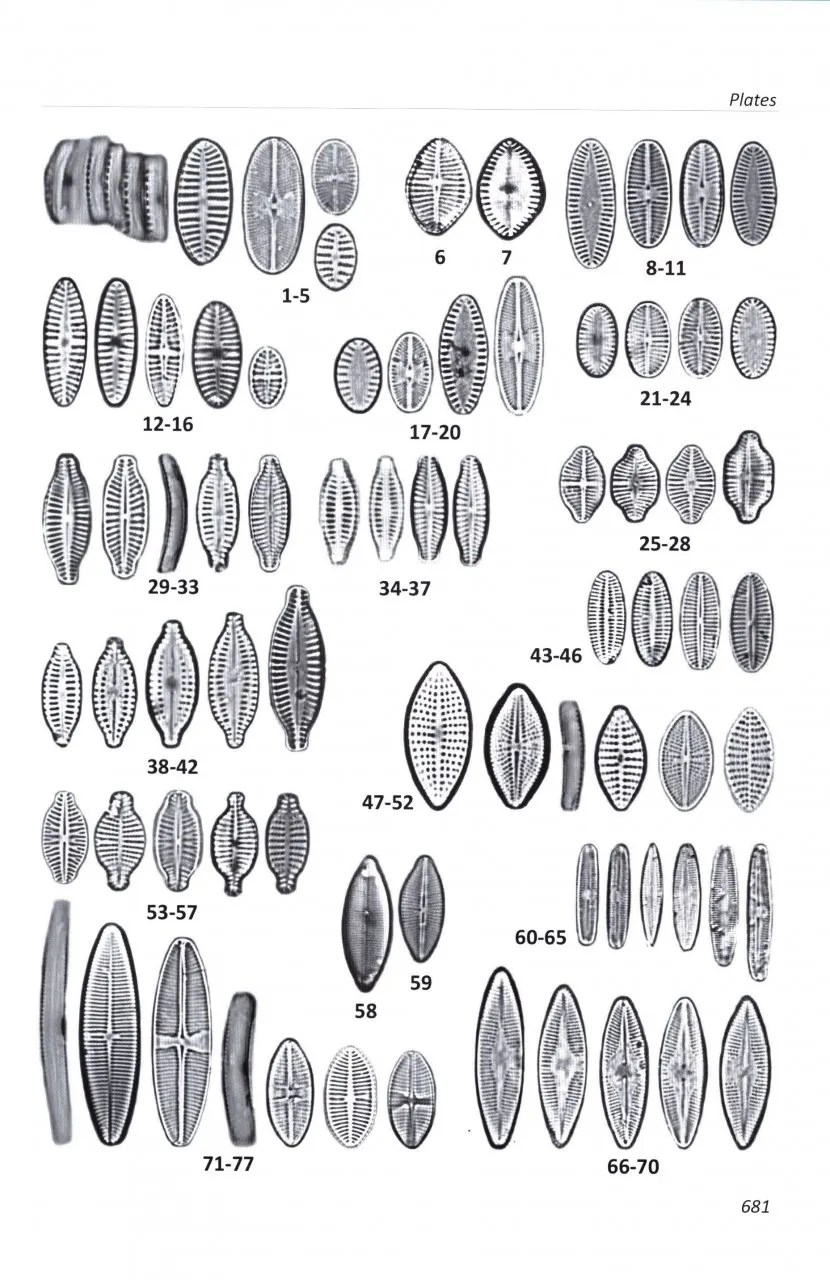 Freshwater Benthic Diatoms of Central Europe: Over 800