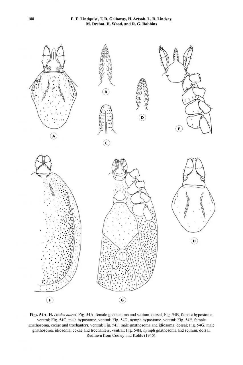 A Handbook to the Ticks of Canada: Ixodida: Ixodidae