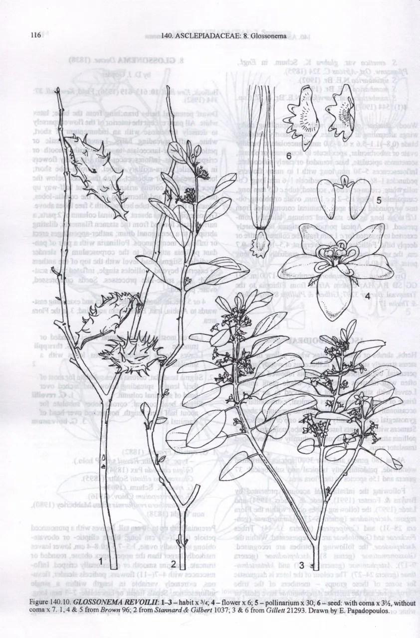 Flora of Ethiopia and Eritrea, Volume 4, Part 1: Apiaceae