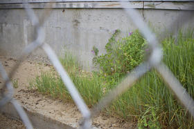 Between a metal fence and the concrete of the old Birdseye plant, sand dunes with native plants naturally rebuilt. The Beauport Hotel is being constructed on a specific type of barrier beach – one with an active dune system – that would make any building