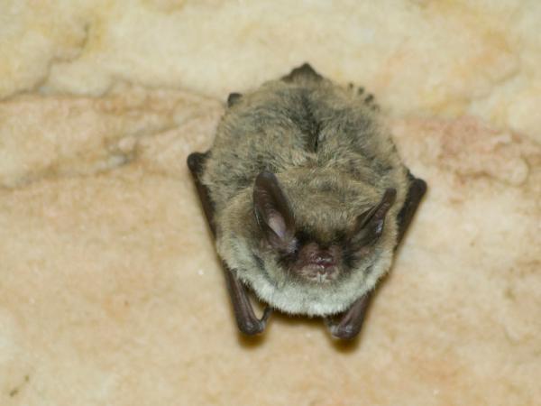Missouri Cave And Survey Shows Bat Population Dive Kbia
