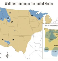 wolf advocates weigh in on challenges to colorado wolf reintroduction kdnk [ 1240 x 840 Pixel ]