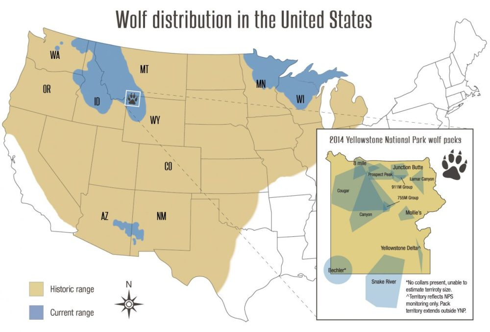 medium resolution of wolf advocates weigh in on challenges to colorado wolf reintroduction kdnk